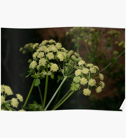 yellow flower plant  Poster