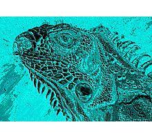 iguana 3 Photographic Print
