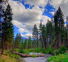 Metolius River Central Oregon by Ryan Nowell