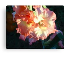 Sword lily 6 Canvas Print