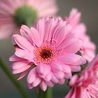 Pink Flowers by Ryan Nowell