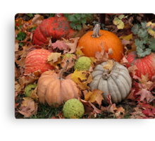 Pumpkins, squash and osage oranges Canvas Print