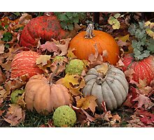 Pumpkins, squash and osage oranges Photographic Print