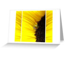Sunflower Tryptichon Greeting Card