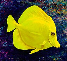 Yellow Tang by Paul Schulz