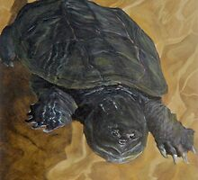 Snapping Turtle by Paul Schulz