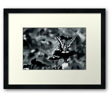 In Butterfly Framed Print