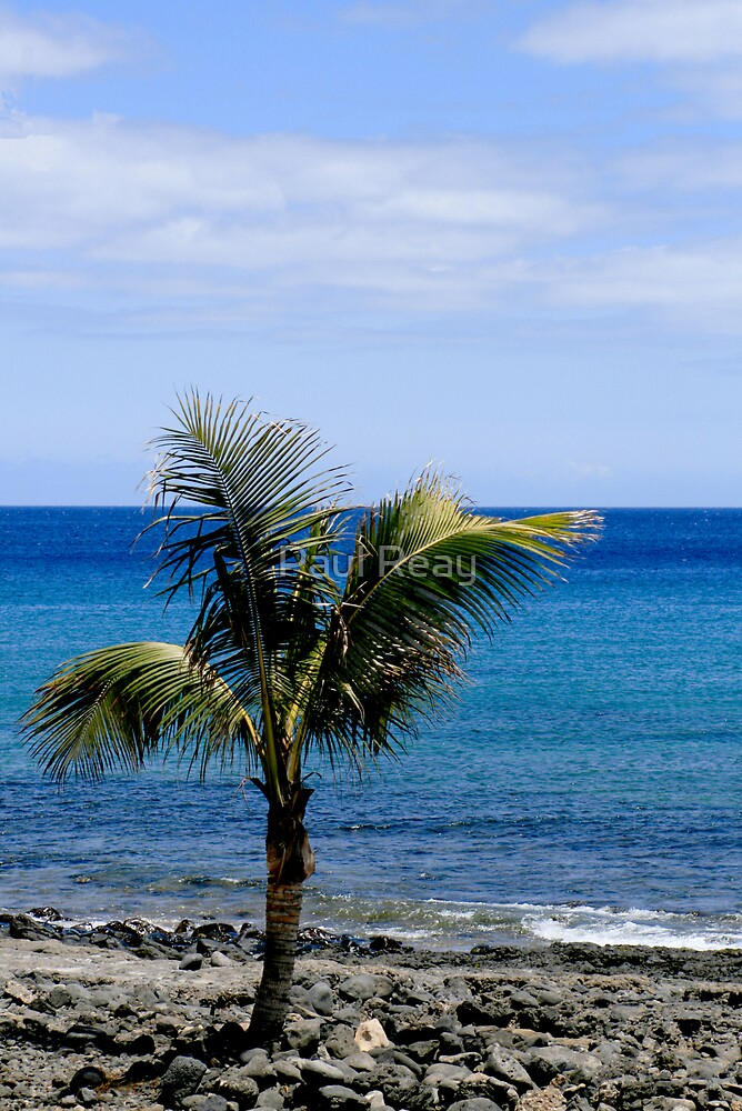 Palm tree on beach by Paul Reay