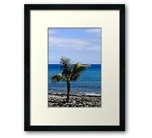 Palm tree on beach Framed Print