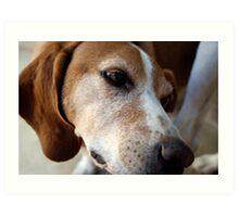 Stray Dog Art Print