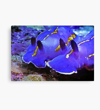 Fascinating Marine Life: Water Snails Canvas Print
