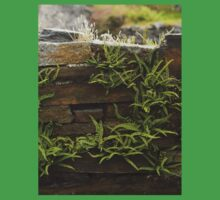 Spleenwort Maidenhair fern on wall at Cashelnagor One Piece - Short Sleeve