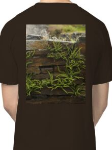 Spleenwort Maidenhair fern on wall at Cashelnagor Classic T-Shirt