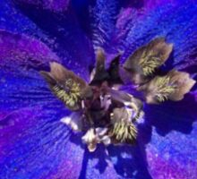 Butterfly Delphinium  Sticker