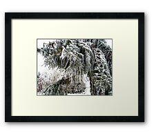 frozen needles Framed Print
