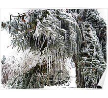 frozen needles Poster