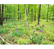 Iris In a Spring Forest Photographic Print