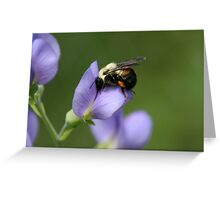 Spring Bumble Bee Greeting Card
