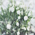 Snowdrops in the snow by Indea Vanmerllin