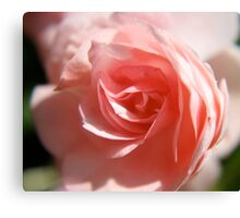 Pink Roses Symbolize Love Canvas Print