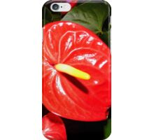 Dutch Antheriums iPhone Case/Skin