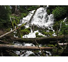 Natures obstacle course Photographic Print