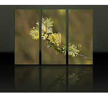 Triptych 4 Photographic Print
