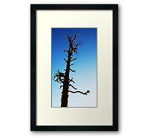 LONEY TREE Framed Print