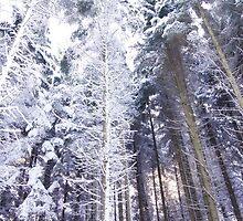 Snowy Forest by Dawid Kita
