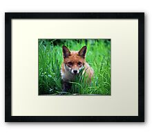 Who's watching who Framed Print