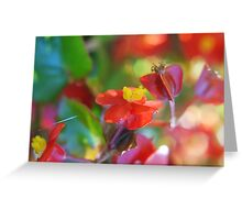 Candy Begonias Greeting Card