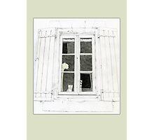 Cat in Window Photographic Print