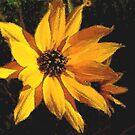 Wild Sunflower by Rosalie Scanlon