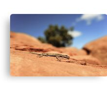 Utah Lizard Canvas Print