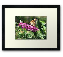 Breathless approach Framed Print