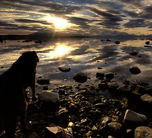 Dog Day Sunset by Daniel Zrno