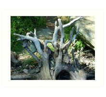 Tree Trunk Driftwood Art Print