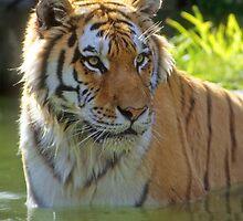Big Cats by ArkansasLisa