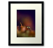 Something A Little Different II Framed Print