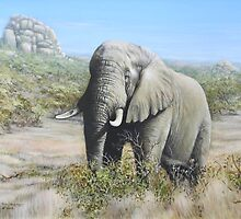 Pilansberg Elephant  by Tom Godfrey