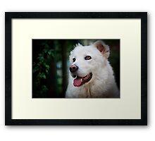 White Dog Framed Print