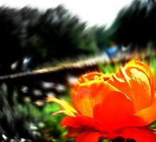 My Little Flower by Brandon Baker