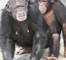 Monkeys by ZeeZeeshots