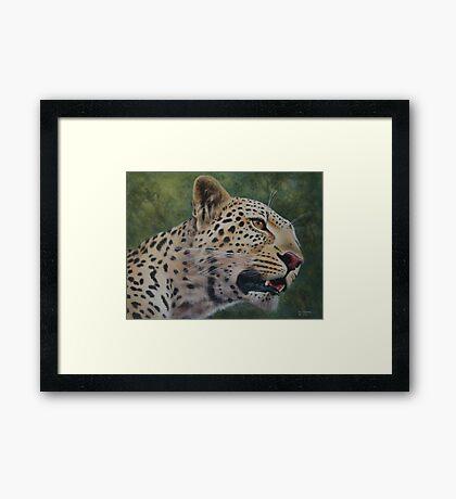 Phil's Leopard - acrylic Framed Print