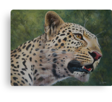 Phil's Leopard - acrylic Canvas Print