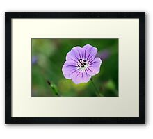 handle with care Framed Print