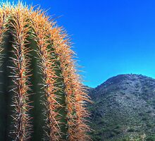 Saguaro Top and Mountain by Roger Passman