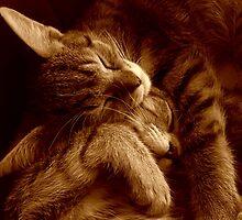 Kittens in sepia by tonyarama