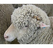 Don't pull the wool over my eyes Photographic Print