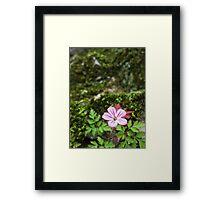 Pink Castle Flower - Helmsley Castle Framed Print